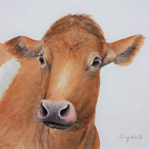 Betty - a Guernsey cow greetings card
