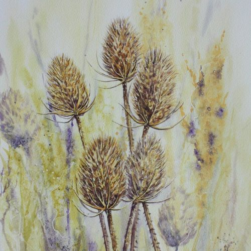 Teasels - a teasel greetings card