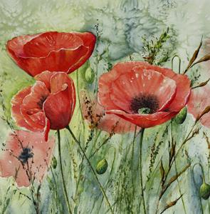 Circle Poppy