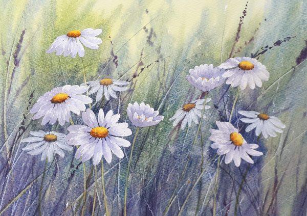 Daisies & Grasses Watercolour Workshop