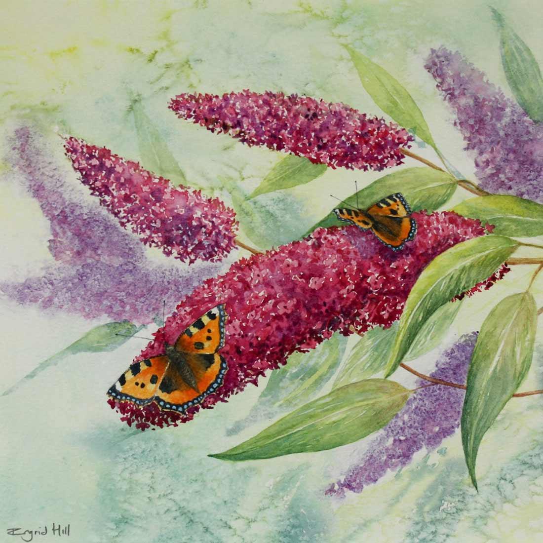 Watercolour of two butterflies on Buddliea flowers