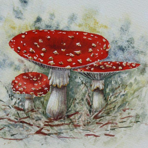 Fairy Stools - a toadstool greetings card