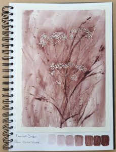 Daniel Smith Raw Umber Violet watercolour study of cow parsley