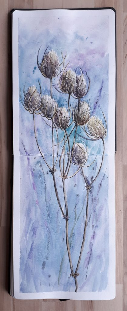 Teasel watercolour sketch in a Hahnemuhle Watercolour Book
