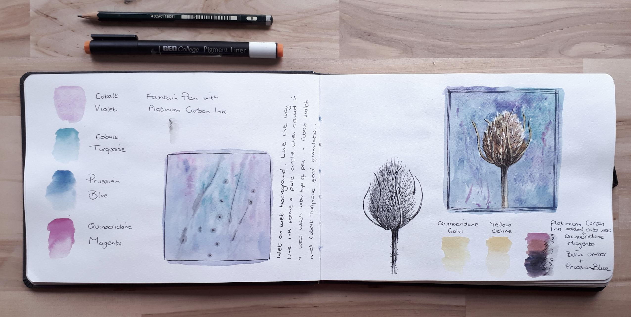 Hahnemuhle Watercolour Book teasel studies